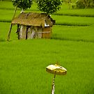 Rice Paddy - Bali, Indonesia by Stephen Permezel
