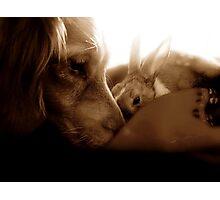 Interspecies Friendship Photographic Print