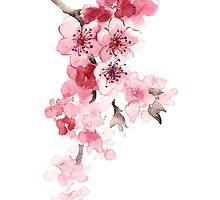 Sakura flowers watercolor art print painting by Joanna Szmerdt