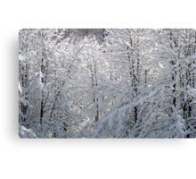Winter Web of White   ^ Canvas Print