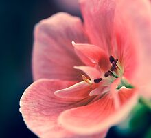 Pink by Caterpillar
