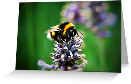 Bumble Bee by Bernard Franken