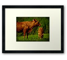 Cow and Veal Framed Print