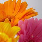 Just Petals by JuliaWright