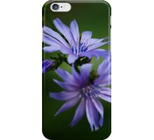 Chicory Flowers iPhone Case/Skin