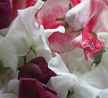 Sweet pea bunch by naturalimages