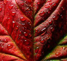 Red Leaf by Al Williscroft