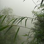 the fog by pablitoblusher