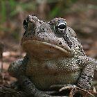 Fowler's Toad (Bufo fowleri) XT0017448 by Cristian