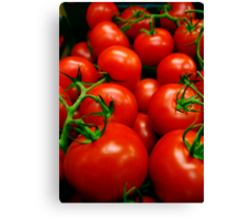 A Crop of Tomatoes  Canvas Print