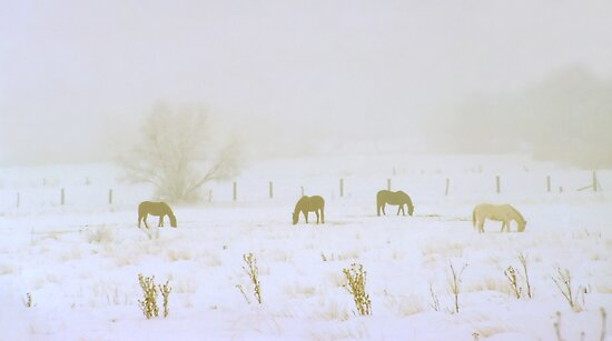 Horses Grazing in a Field of Winter Snow and Fog by SteveOhlsen