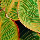 Abstract Leaves by Rosalie Scanlon