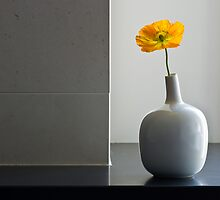 Vase With Poppy by prbimages
