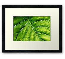 Nature's solar panel Framed Print