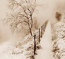 Sleeping Nature by Angelika  Vogel