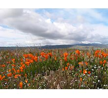 Antelope Valley California Poppy Reserve (prints only) Photographic Print