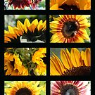Sunflower Collage 2 by marybedy