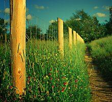 In the fields by Stefan Chirila