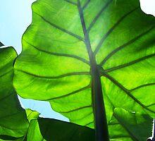 """Green Veins by Lenora """"Slinky"""" Regan"""