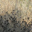 Winter Weeds, Dark and Light- View Larger by Navigator