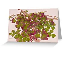 Colorful Wild Columbine Leaves Greeting Card