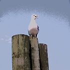 Seagull On Post by steelwidow