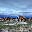 Horses on the Mongolian plain by Christopher Meder