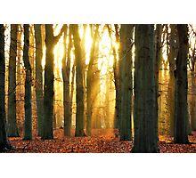 When the new day rose in the forest Photographic Print