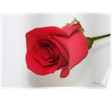 Let Me Call You Sweetheart ~ A Rose Poster
