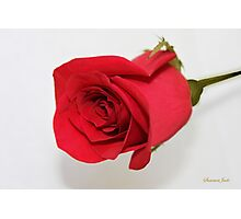 Let Me Call You Sweetheart ~ A Rose Photographic Print