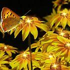 Nature's Nightlights by digitalmidge