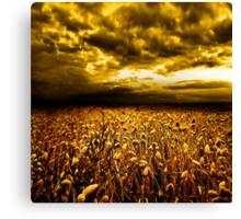 Golden Field Canvas Print