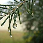 raindrop reflected  by Jan Stead JEMproductions