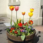 Tulips by christinawalker