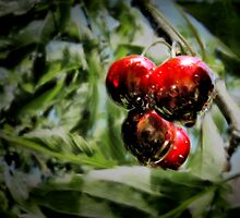 Some cherries by Kurt  Tutschek