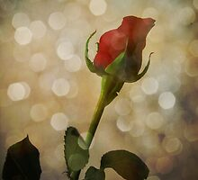 Sparkling Red Rose Bud Photograph Art by Adri Turner