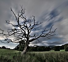 Tree by adampriley
