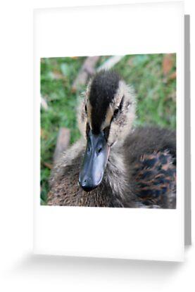 Orpheus - A Mallard Duckling by AARDVARK