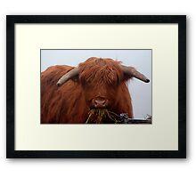 Freddy the Bull Framed Print