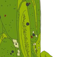 Jar of Pickles Sticker