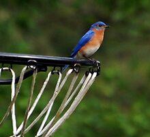 Hoops Anyone? by Lisa Jones Caldwell