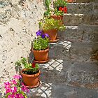 Flower pots on stone steps by Gary Lengyel