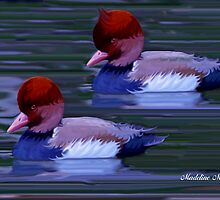 Red-Crested Pochard by Madeline M  Allen
