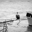 Lone Pelican by Jamaboop