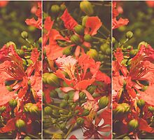Red Flamboyant Flowers Collage by tropicalsamuelv