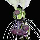 Bat Flower by AlldogsDesigns