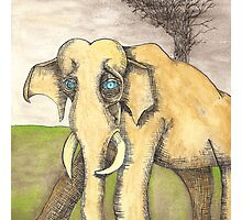 Blue Eyed Elephant Photographic Print
