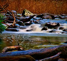 """""""Along the Cumberland River"""" by Phil Thomson IPA"""