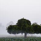 Misty Meadow by Maria Dryfhout