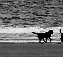 it;s a dog's life b&w by SNAPPYDAVE